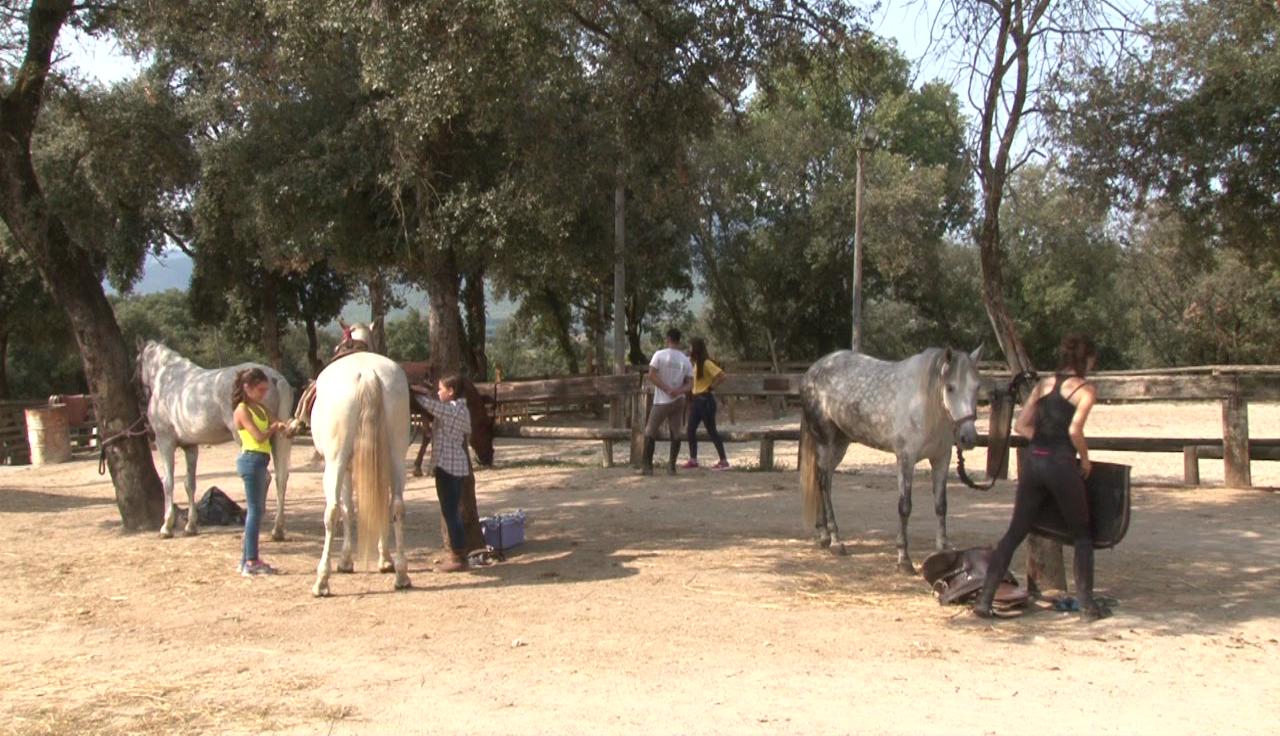 El Consell Comarcal ofereix un curs de cura i maneig del cavall per a joves